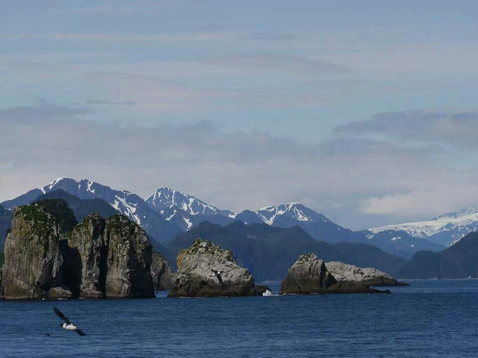 Kenai Fjords Cruise. ..a must