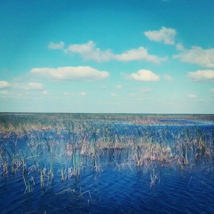 Florida Everglades. 2014