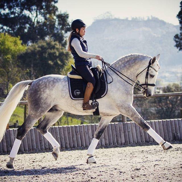 ☪pinterest Frenchfangirl ☼ Horses Dapple Grey Horses