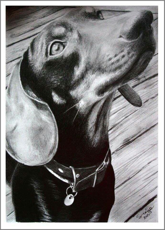 Pin Di Tanya Alderink Su I Love Doxies Bassotto Cani