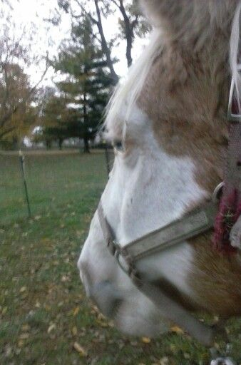 My beautiful girl sunshine shes one of the best horses that i've rode