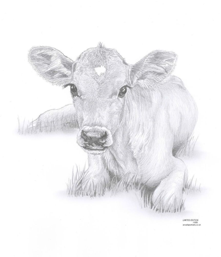 cow calf baby art pencil drawing invitation watercolor