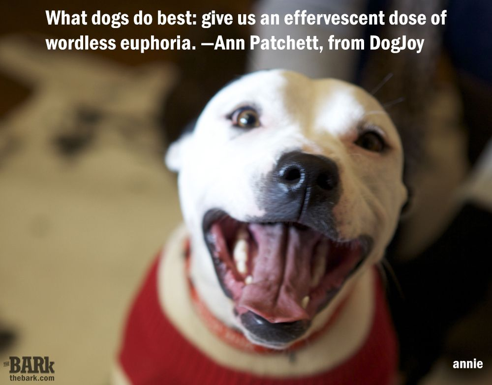 Pin by The Bark magazine on Dog Quotes Dog quotes, What