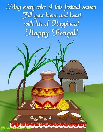 Pongal hindu greetings pinterest happy pongal happy and messages pongal m4hsunfo