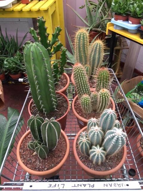 Cacti At Urban Plant Life Garden Centre Dublin Ireland Plants