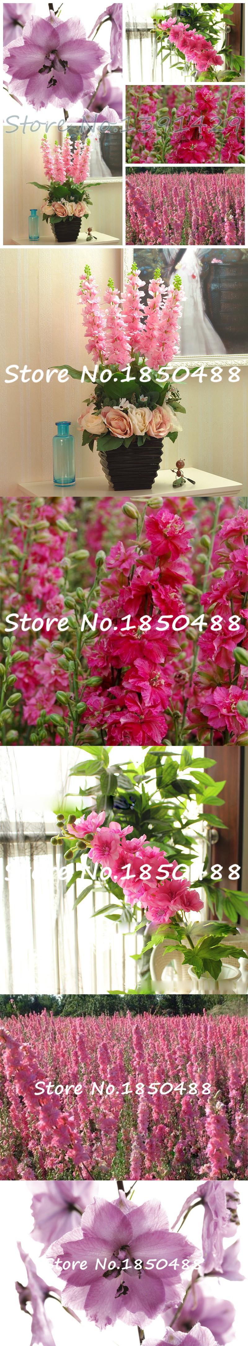 50 pcs/ bag rocket consolida, pink larkspur, delphinium pink flower ...