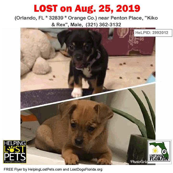 Lost Dogs Have You Seen Kiko And Rex Lostdog Kiko Rex Orlando Penton Place Kiko Rex Male 321 362 3132 Fl 32 Losing A Dog Dogs Pet Detective