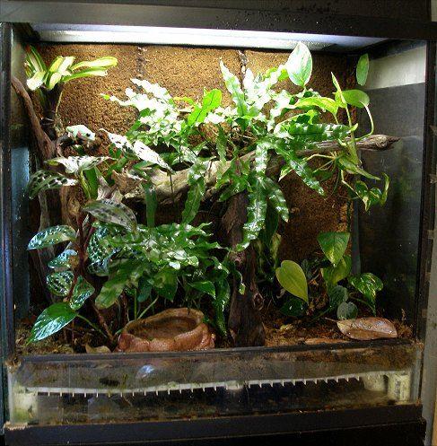 Terrarium Work Pinterest Terraria Amphibians And
