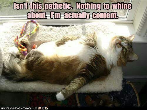 Poor kitteh is content...