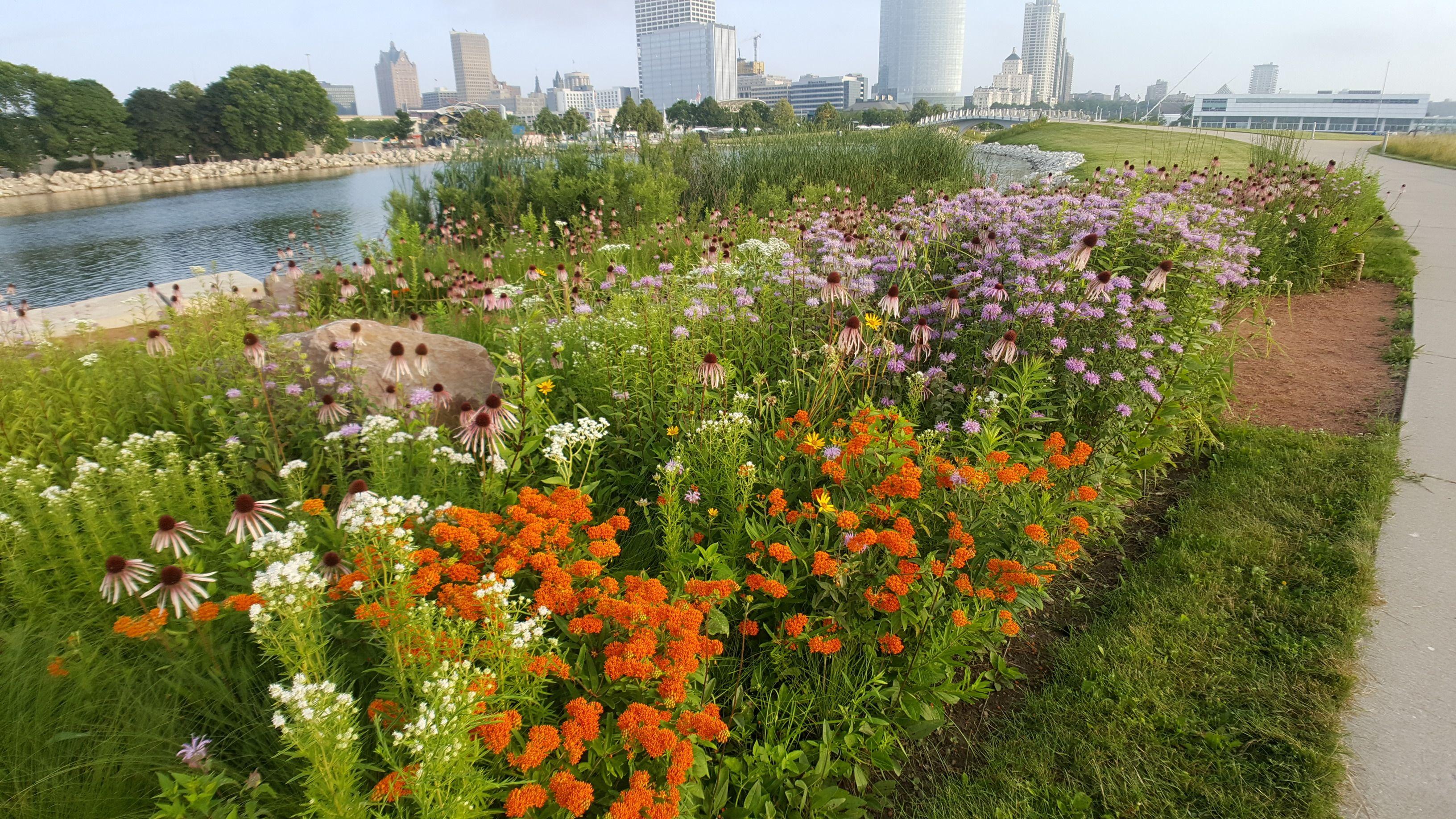 Pin by Prairie Nursery on Garden Ideas | Garden ...