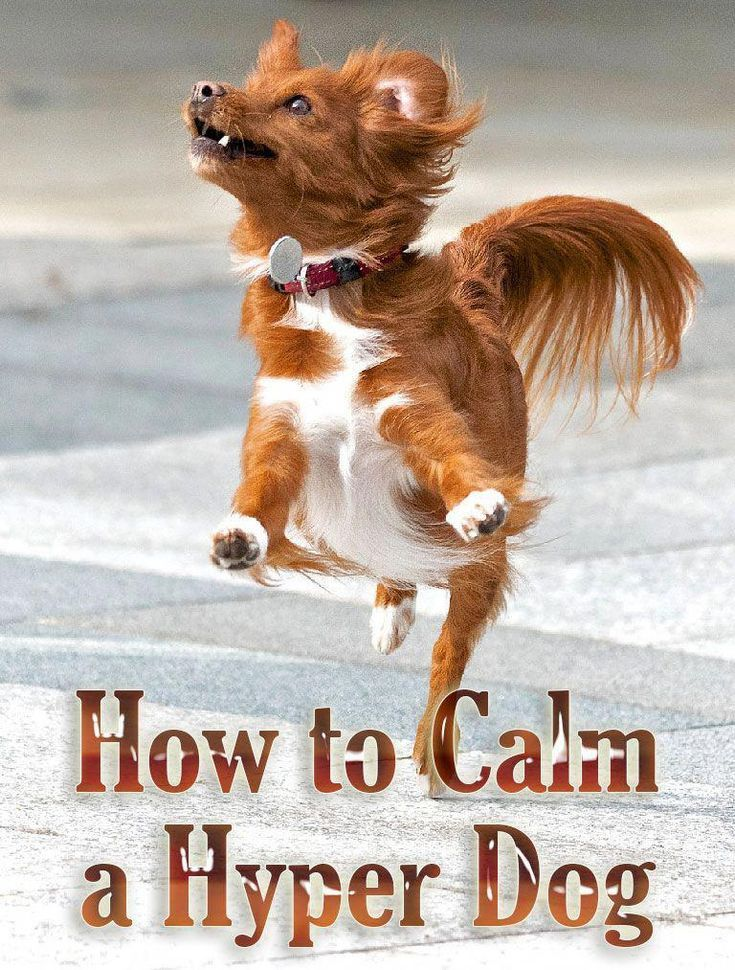 how to calm an aggressive dog in the moment