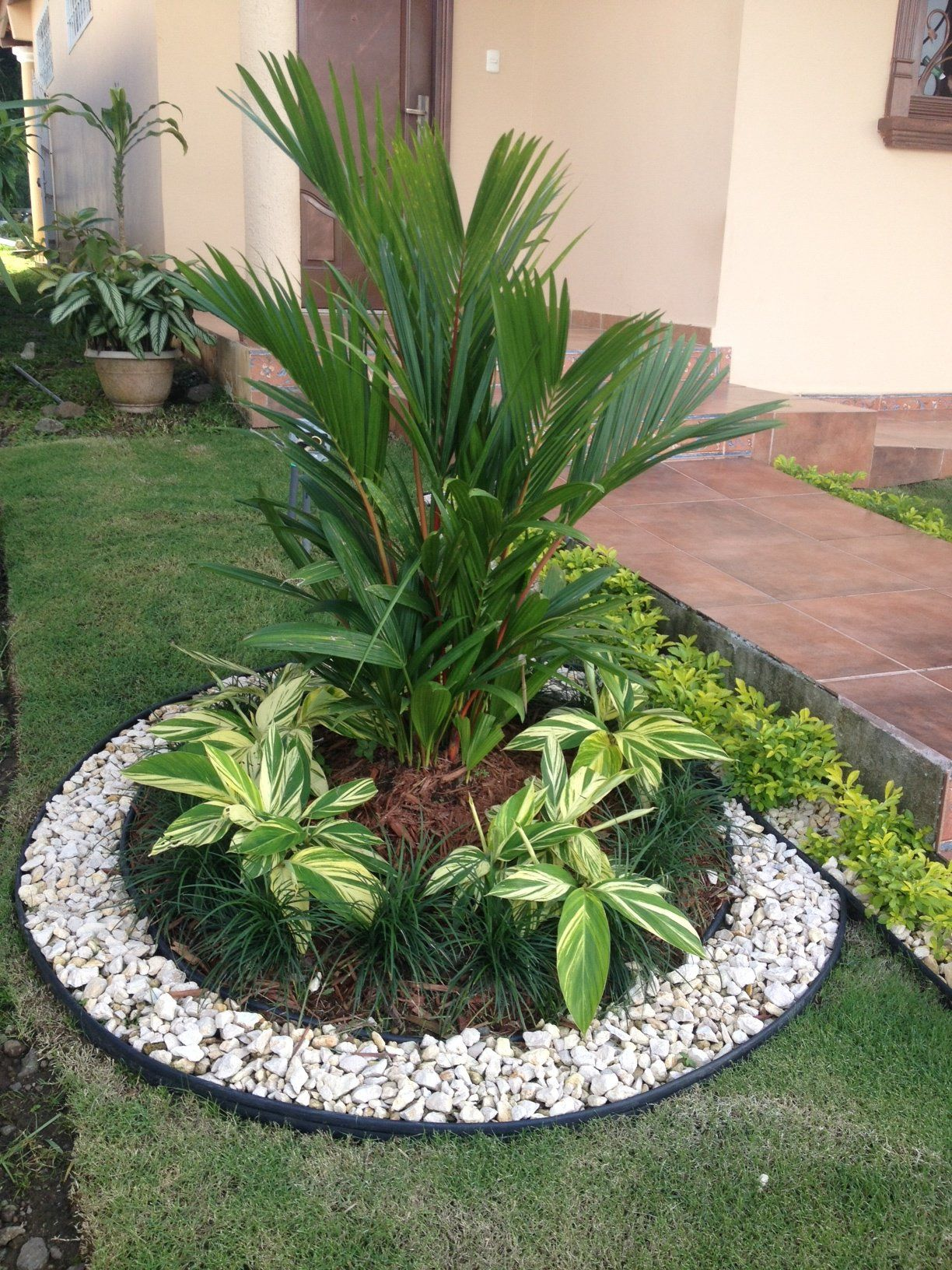 Autour Du Palmier Parterre Avec Cailloux Jardins Deco Jardin Et