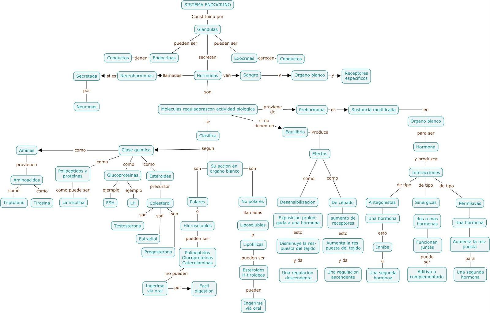 Resultado de imagen para sistemas endocrino mapa conceptual ...