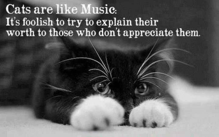 Cats are like Music. It's foolish to to try to explain their worth to those who don't appreciate them. #quote #music #cat