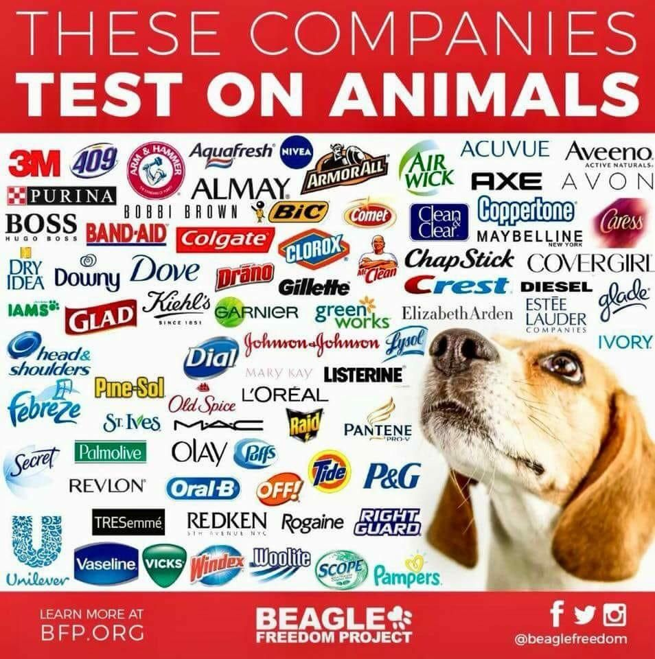 These Companies Test On Animals Stop Animal Testing Beagle Freedom Project Brand Test