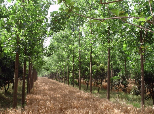 Agroforestry meaning with proper definition and their