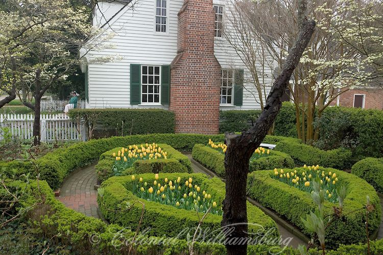 Colonial Williamsburg ~ Yellow Tulips And Other Spring Flowers At The  Powell House Garden In April