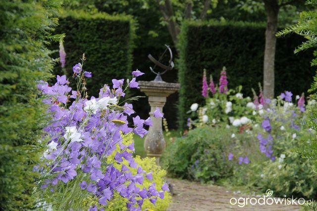 Galeria Zdjec Urocze Ogrody W Cieniu Ogrodowisko Plants Garden Shades
