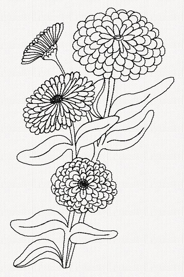 Zinnia Flower Redwork Embroidery Flower Drawing Pyrography
