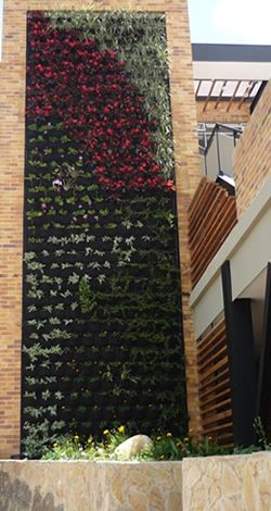 Jardineros Ltda -Paisajismo y Jardineria Profesional- Muros Vivos
