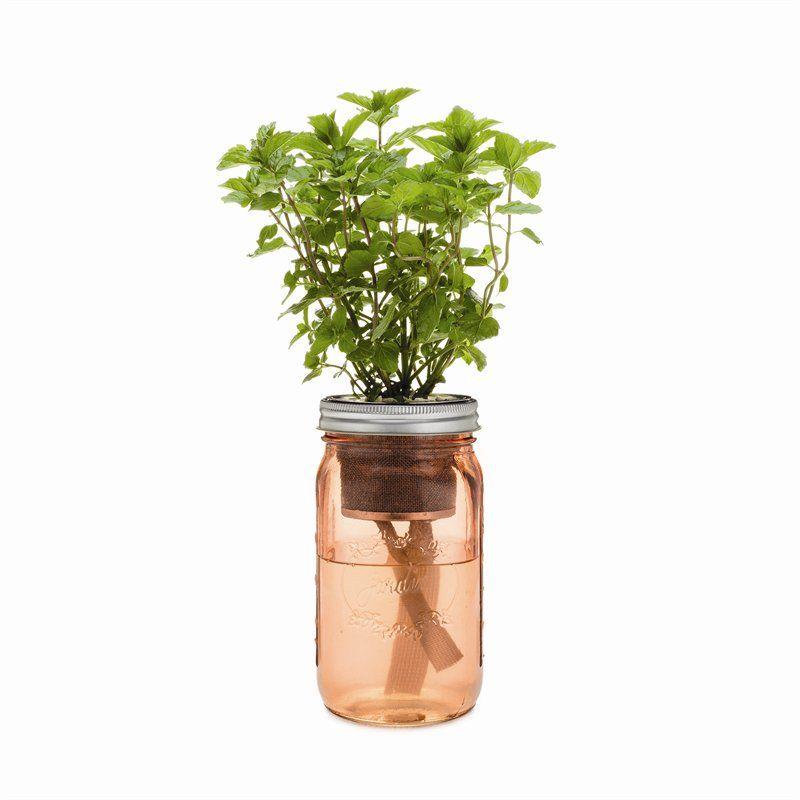 Self Watering Herb Garden Jar Mint