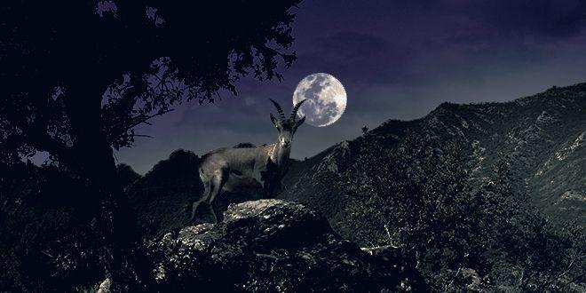 La Eco Reserva de Ojén organiza una actividad de voluntariado nocturna para el…
