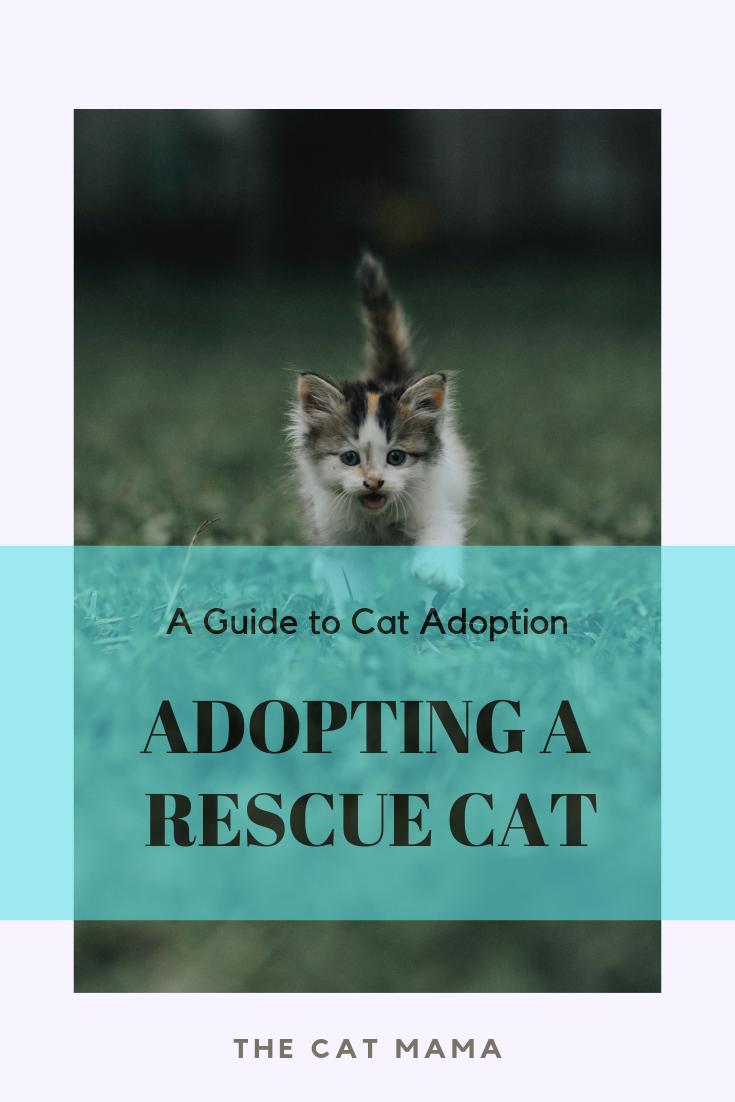 Cat Adoption Providing A Home For Rescue Cats Cat Mama Cat Lover Mama Cat Cats Sick Cat