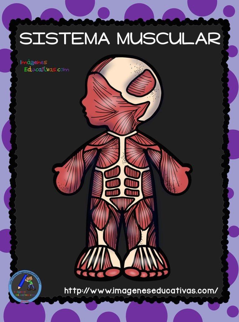 El Cuerpo Humano; Aparatos y Sistemas para Primaria (6)   Cuerpo humano para  niños, Sistemas del cuerpo humano, Aparatos del cuerpo humano