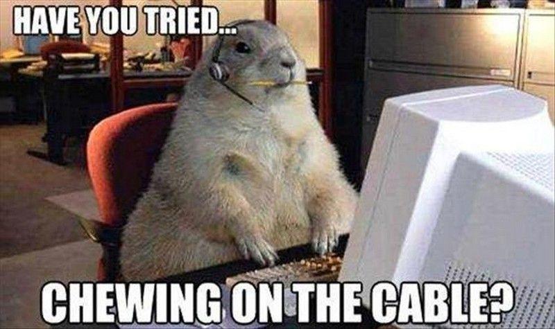 Image result for animal business meme