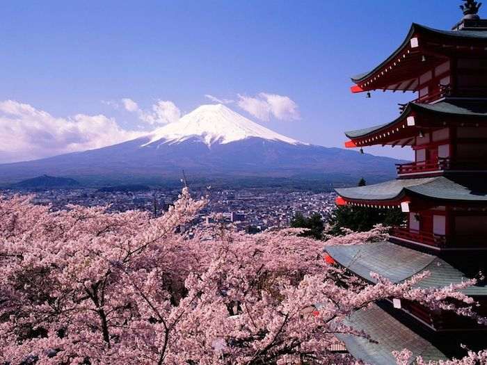 Image result for kyoto cherry blossoms