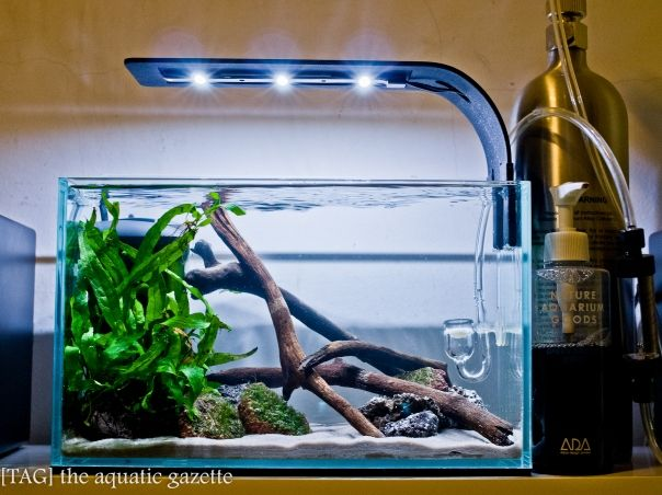 This Looks Like A Fairly Easy Aquascaping Setup To Do. Could Probably  Replicate With Fake Plants To Avoid All The Daily Maintenance In My Office  Tank.