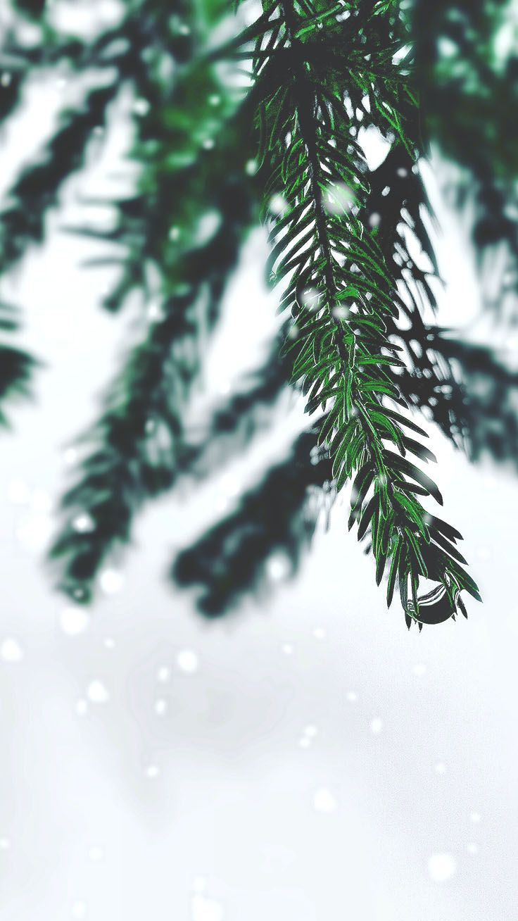 21 Merry Preppy Christmas iPhone Wallpapers