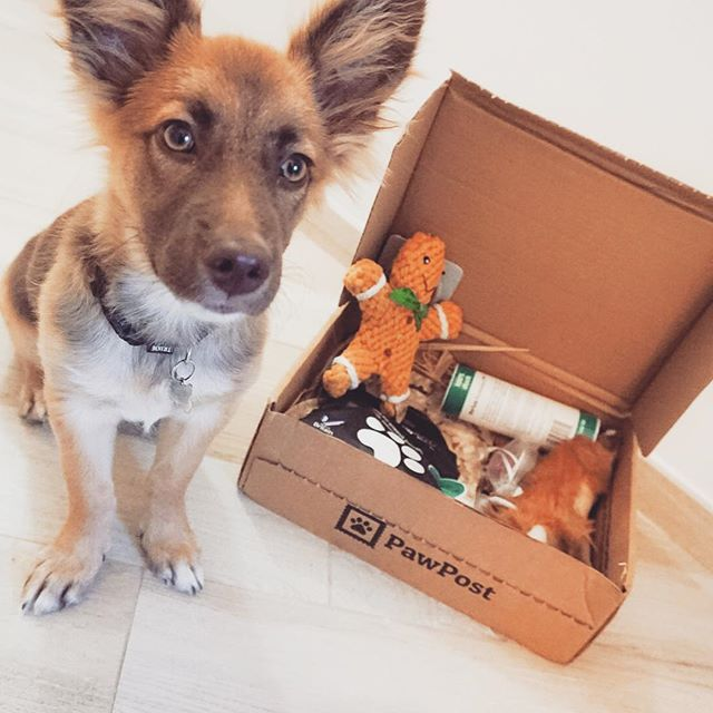 This Christmas Treat Your Pet To The Ultimate Gift Pawpost S