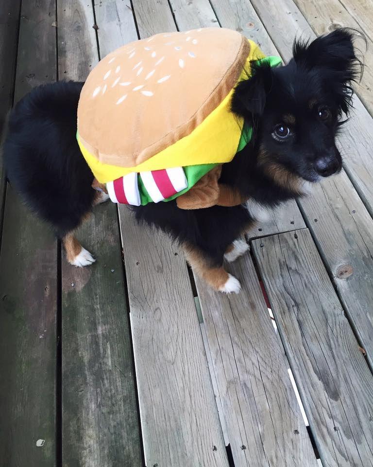 Hamburger Dog Costume Halloween Dog Costumes Halloween Puppies