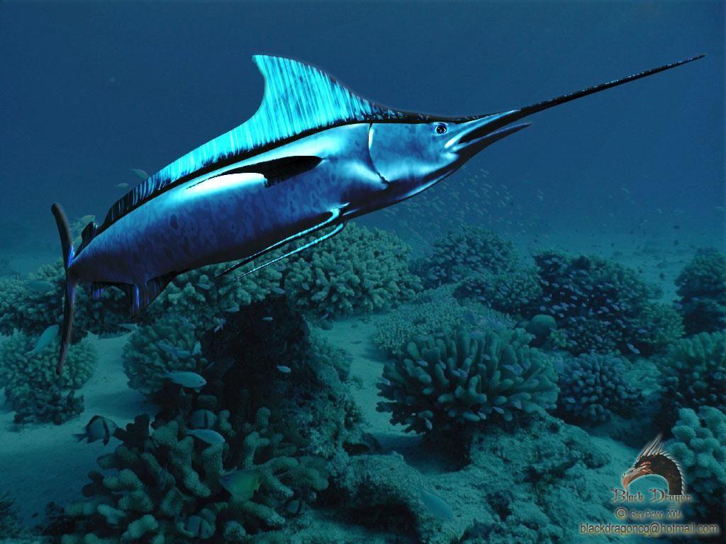 Animales buscar con google pez espada animales del for Curiosidades del pez espada