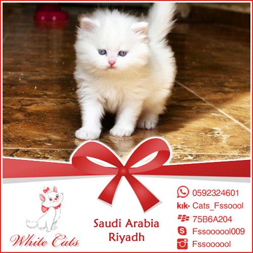 فالك طيب دعاية إعلان إعلانات تسويق تسوق الرياض قطط قطة قطوه بس أبيض بيضاء كات عروض تخفيضات Ad Ads Riyadh Saudi Ksa Cats White Cats Animals