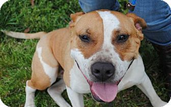 Maybelle Urgent Calhoun County Humane Society Inc In
