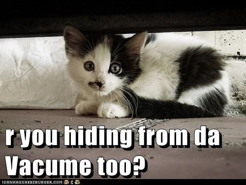 R You Hiding From Da Vacume Too Cheezburger Cat Pets Funny Animals