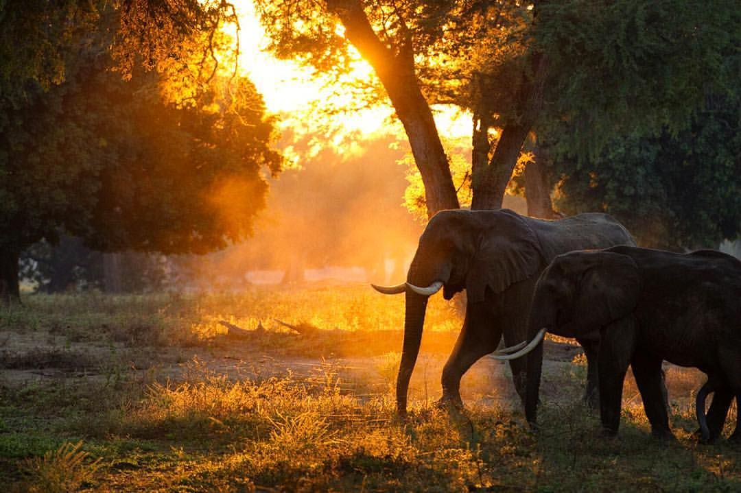 Good morning from Africa!