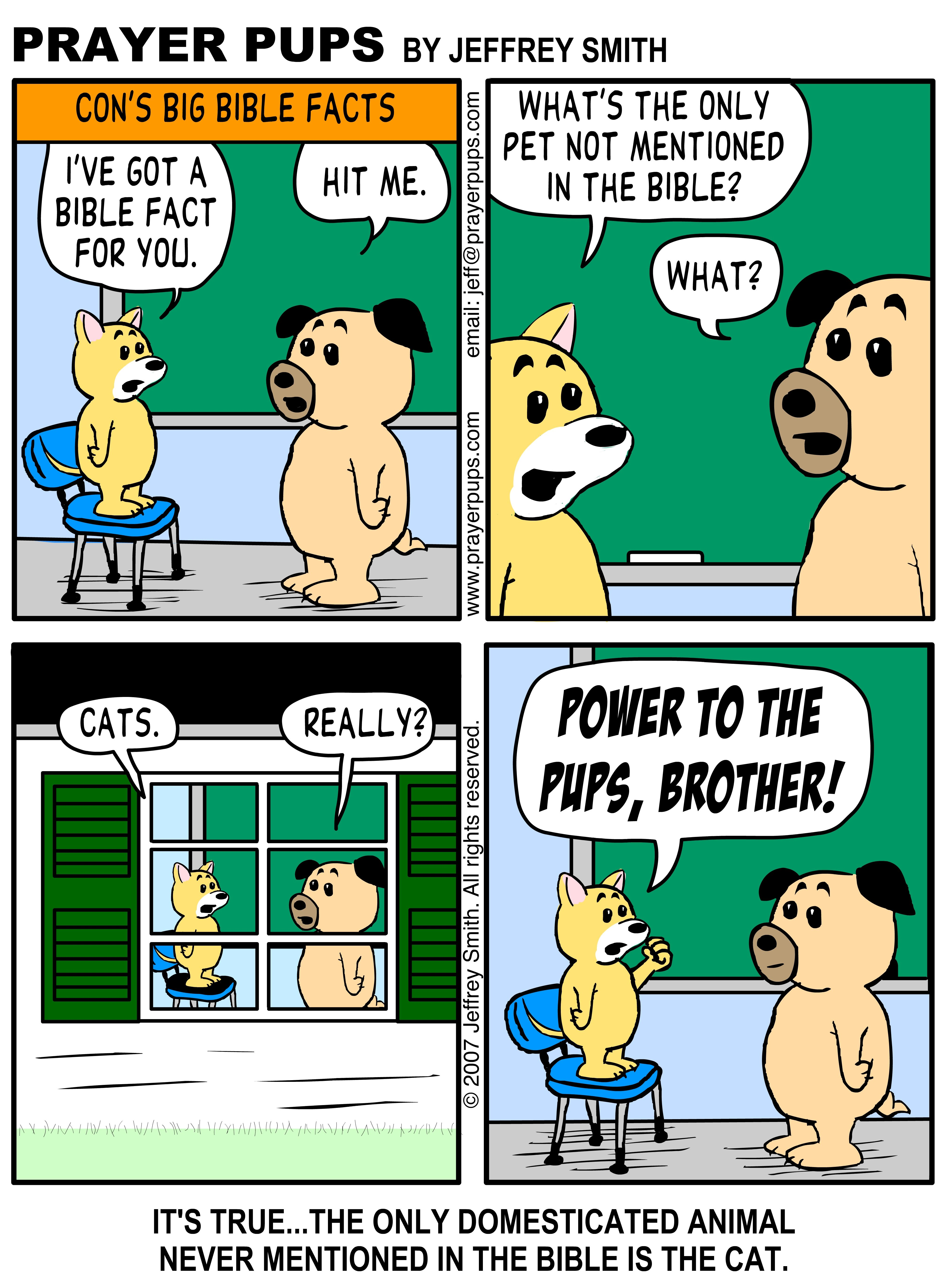 No Cats In The Bible Christian cartoons, Christian