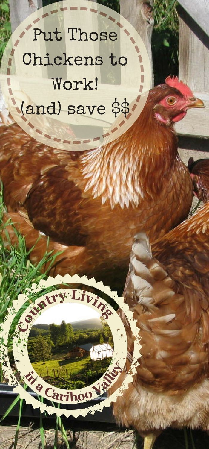 put those hens to work and let them pay for some of their own