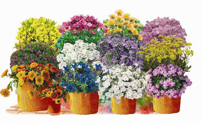 Suchý múr   Kvety a Záhrada