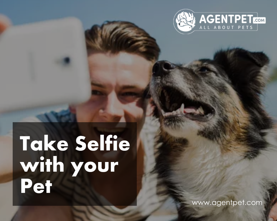 Take Selfie With Your Pet Pet Relocation Pets For Sale Pets Online