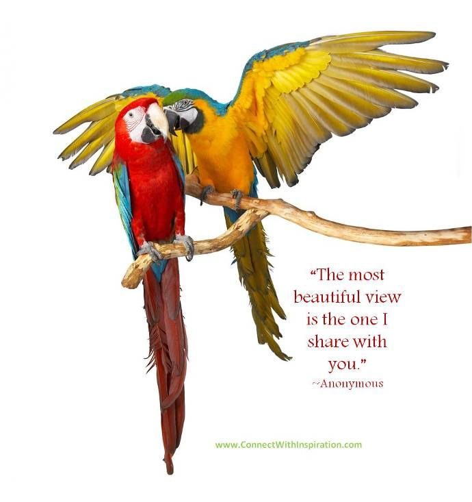 Love Birds Images With Quotes