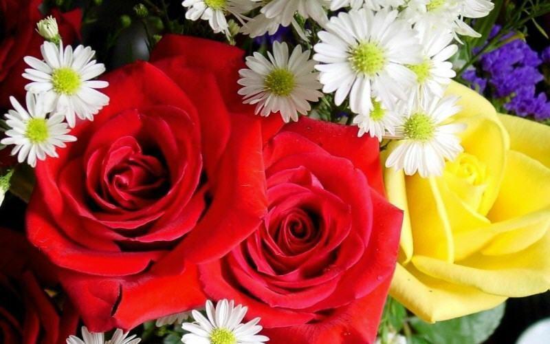 Burdur Çiçekçilik