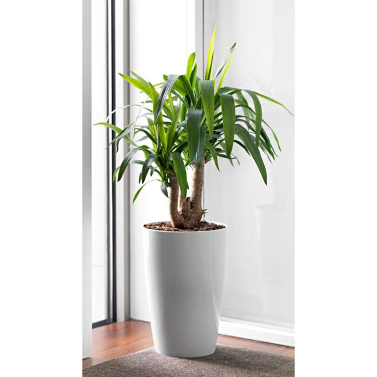 Office plants supplied and maintained by Plant Design