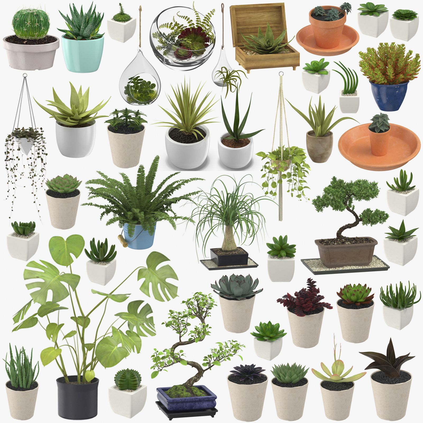 This is Indoor Plants Collection. Each asset is a high end