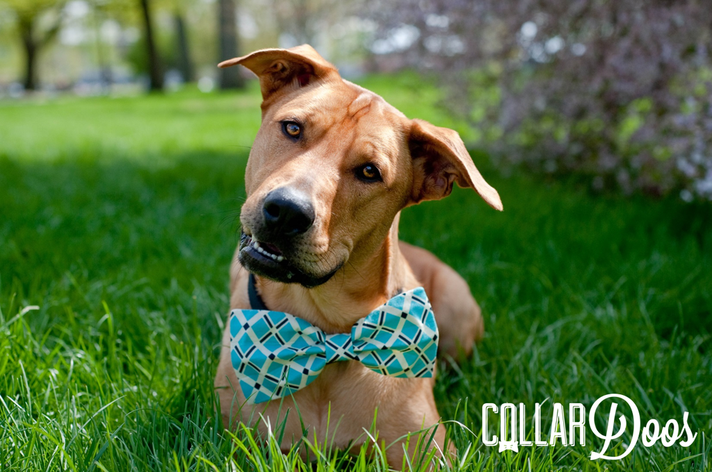 Top Bow Tie Bow Adorable Dog - 1bd32f2d26bfa3babc1be5bdd5b17434  Gallery_577751  .png