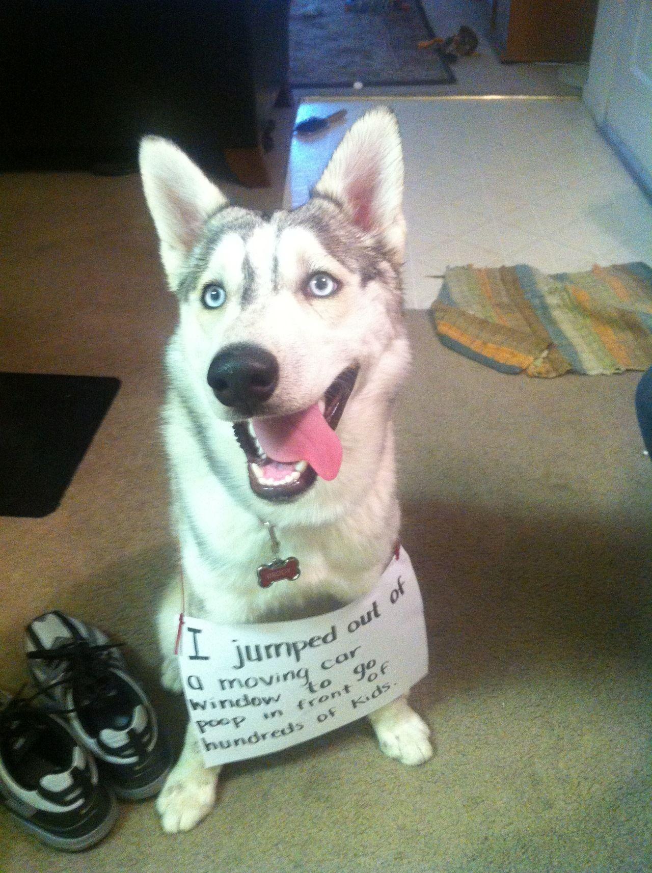 Image Image Funny Dog Pictures Dog Shaming Funny Dog Shaming