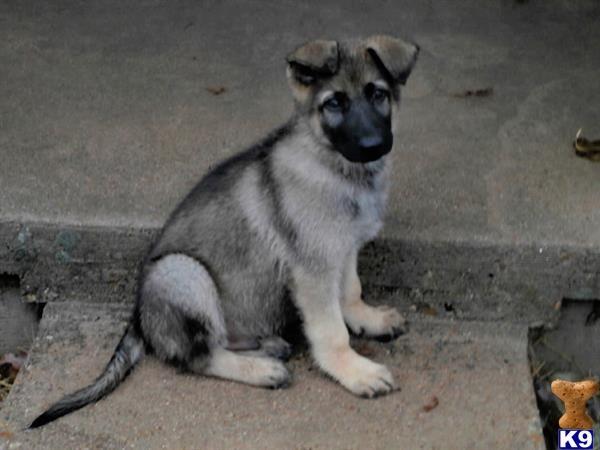Craigslist Austin Pets For Sale